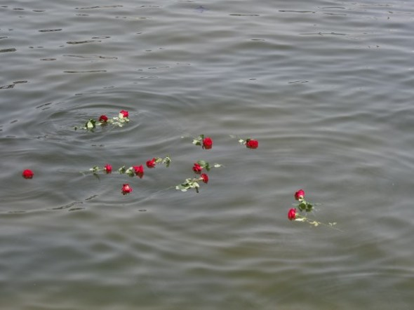 Remembrance roses